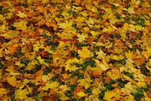 Come Mow foglie in the Grass