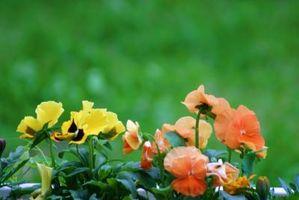 Come uccidere le erbacce, ma non le piante o arbusti