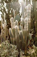 Come progettare un Aiuola Utilizzando Cactus-come le piante