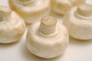 Kit di funghi fatto in casa con farina di riso biologica Brown