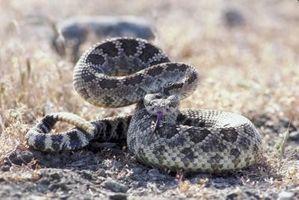 Mantenere serpenti a sonagli fuori del vostro giardino