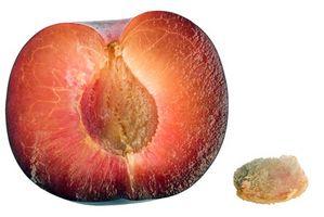 Come piantare un giapponese Plum Fruit Tree