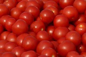 Come coltivare pomodori testa in giù in un secchio