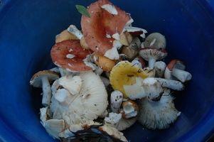 Come faccio a crescere i funghi con No Kit?