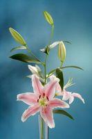 Che cosa è un fiore regolare?