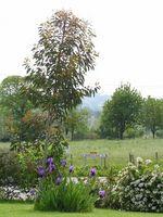 Foglie di eucalipto e compost