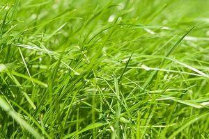 Piantare Seme dell'erba