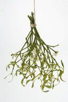 Come coltivare un eterno secco business Fiore