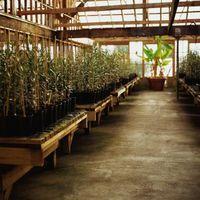 I pesticidi per la coltura idroponica