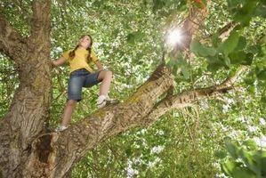 Come tagliare le grandi rami di albero pendente