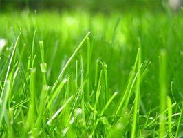 Suggerimenti per la semina Seme dell'erba