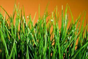 Come sbarazzarsi di latifoglie Grass