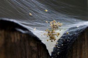 I pesticidi che uccide Water Bugs & Spiders