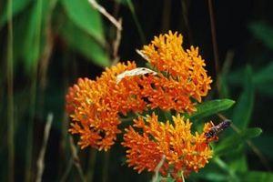 Sementi e talee di piante autoctone