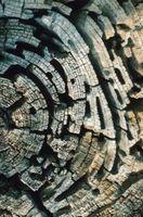 Come uccidere un Termite Colony in legna da ardere