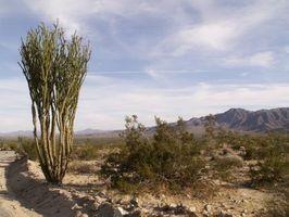 Deserto della California Arbusti