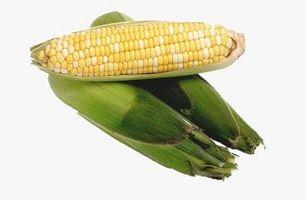 Quando dovrei prima vedere il mio dolce di grano che cresce?
