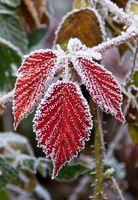 Come proteggere le piante dal Frostbite