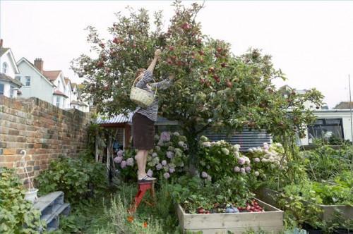 Come potare un albero di mele