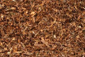 Può pacciamatura di corteccia di pino uccidere altri alberi?