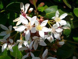 Quali sono le cause Foglie a cadere fiori?