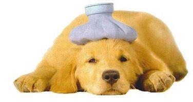 Come rimuovere le macchie sul tappeto Dog Vomit