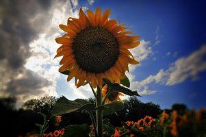 La definizione di fiori annuali