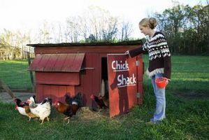 Quanto letame di pollo per acro?