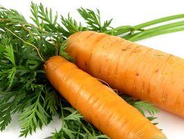 La germinazione di semi di carota