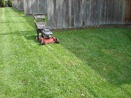 La corretta taglio erba Heights