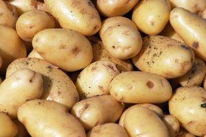 Come coltivare patate in acqua con la coltura idroponica