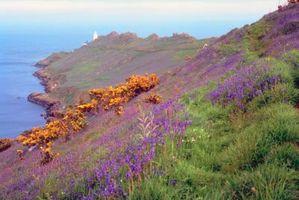 Come separare Lavender & Heather