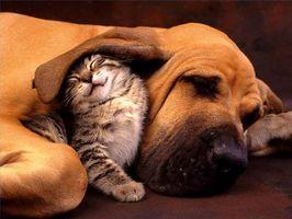 Come rimuovere Pet odori Naturalmente