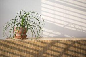 Come applicare terra di diatomee per le piante per interni