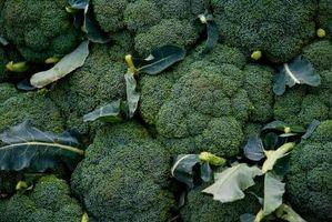 Quando piantare i semi del broccolo