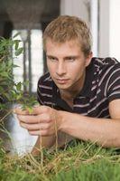 Quali sono le cause macchie nere o zone morte sulle estremità delle foglie di Piante?