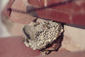 Repelling Vespe e api intorno ad una casa
