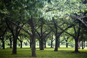 Tipi di erba che crescono sotto gli alberi Ombra