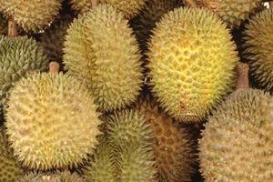 Alberi da frutto asiatiche con enormi Fruit & Enorme spine