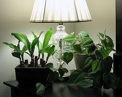 Come scegliere l illuminazione artificiale per le piante d