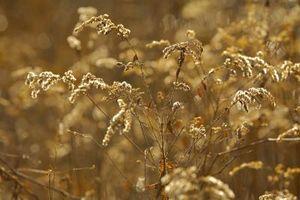 Weed e Grass Killers che sono sicuri per Bulbi da fiore