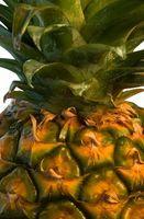Come coltivare casa ananas Grown