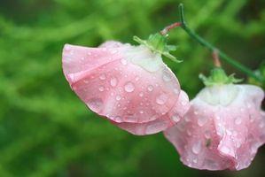 Parti di un Bean Fiore