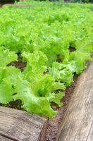 Come piantare un orto alzato