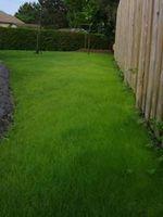 A proposito di erba che cresce solo 4 pollici di altezza