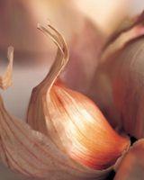 Come coltivare aglio da una lampadina in una pentola