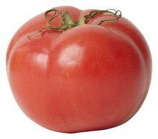 Quanto tempo prima che il mio Big Boy Pomodori Ripen?