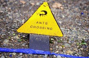 Come sbarazzarsi di formiche con Bait Ant