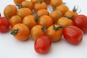 Come coltivare pomodori testa in giù in un cesto di filo