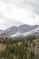 A proposito di fatti il cedro rosso occidentale Albero